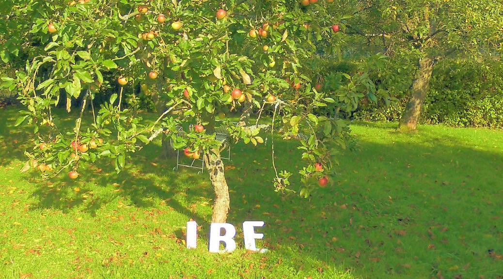 Buchstaben des IBE im Gartenanlage des Instituts