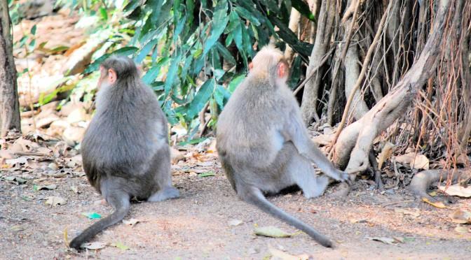 Zwei Affen die sich nicht anschauen